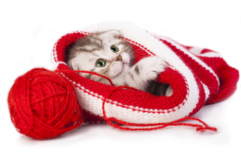 Фото обои клубок, шапка, малыш, котёнок, нитки, скоттиш-фолд, Шотландская вислоухая кошка