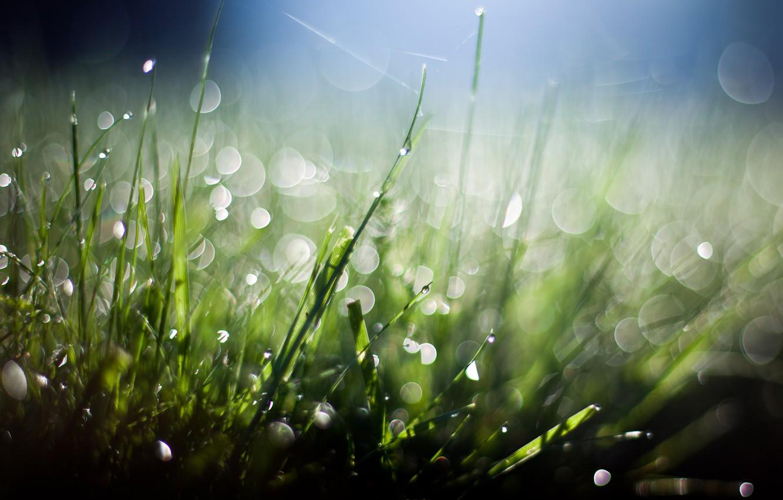 Фото обои green, grass, black, blue, bokeh