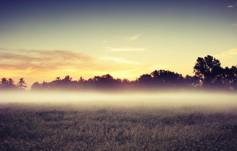 Фото обои поле, деревья, утро