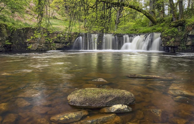 Фото обои лес, река, камни, Англия, водопад, England, North York Moors, Walker Mill Foss