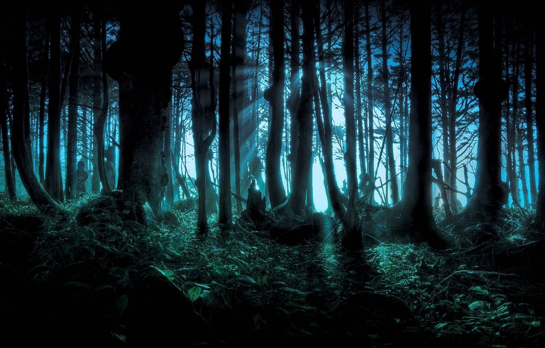 Фото обои лес, деревья, ночь