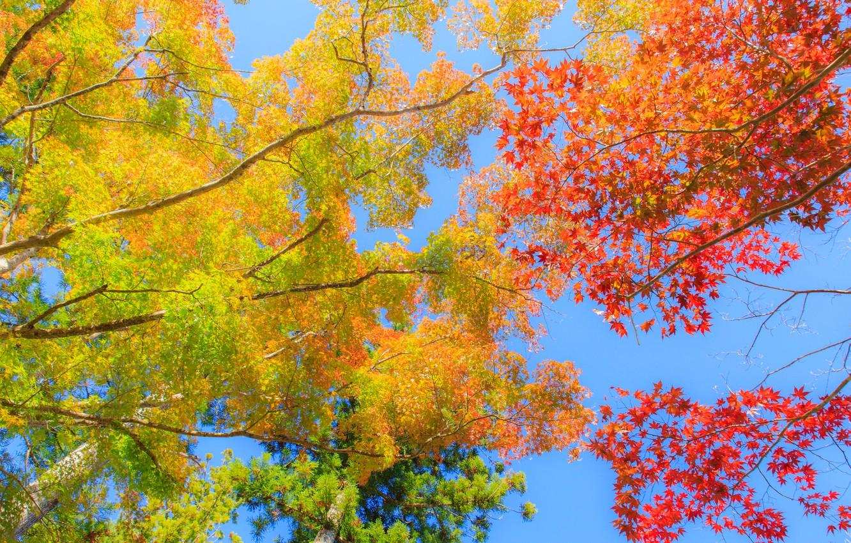 Фото обои осень, небо, листья, деревья, багрянец