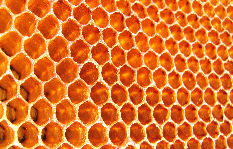 Фото обои соты, пчелы, мед, пчелиные