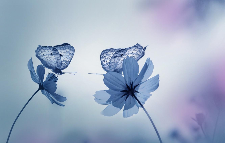 Фото обои бабочки, цветы, природа, сад, Синие тона