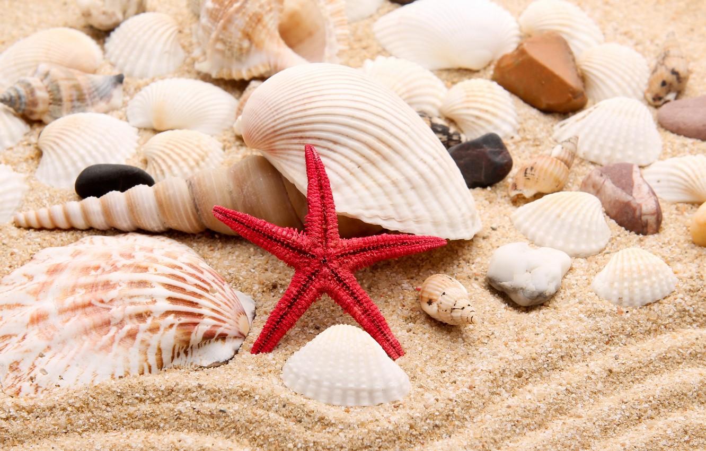 Обои жемчужина, sand, ракушки, still life, Seashells, Marine, perl. Разное foto 18