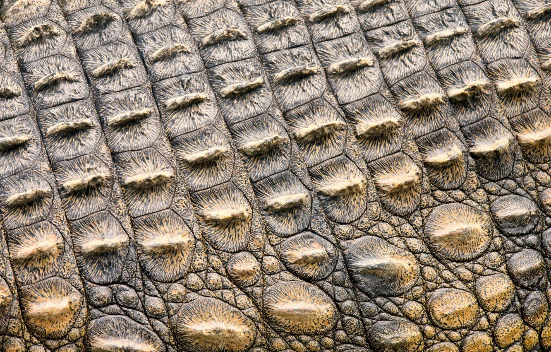 Обои Crocodile, Leather, Крокодил, фон, texture, кожа, Red, красньій. Текстуры foto 10