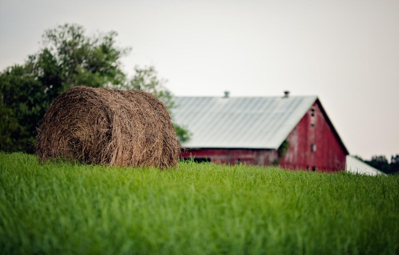 Фото обои лето, трава, тюк, солома, ферма