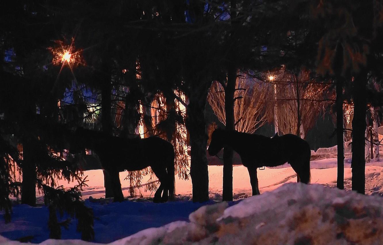 Фото обои ночь, кони, весна, март