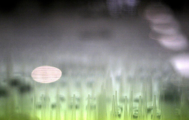 Фото обои texture, image, Pointy