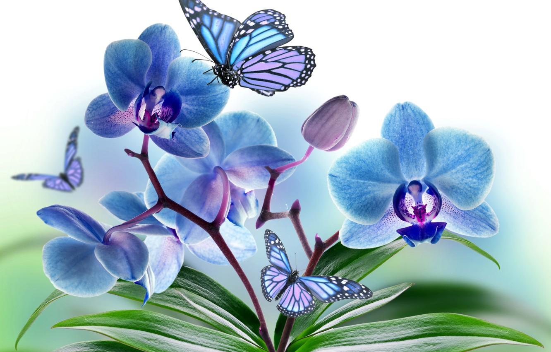 Обои мотылек, цветы, Коллаж. Разное foto 19