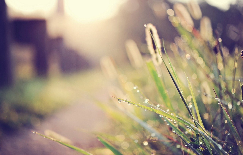 Фото обои трава, макро, свет, улица