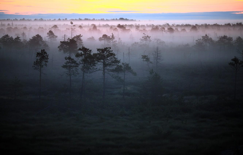 Обои туман, утро. Пейзажи foto 10