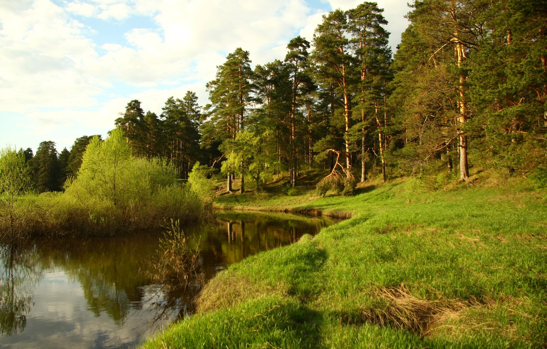 Фото обои лес, пейзаж, природа, река, отдых, обои, прогулка, Кава