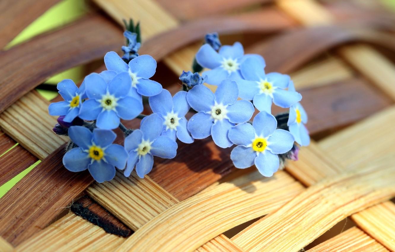 Фото обои лето, цветы, фон