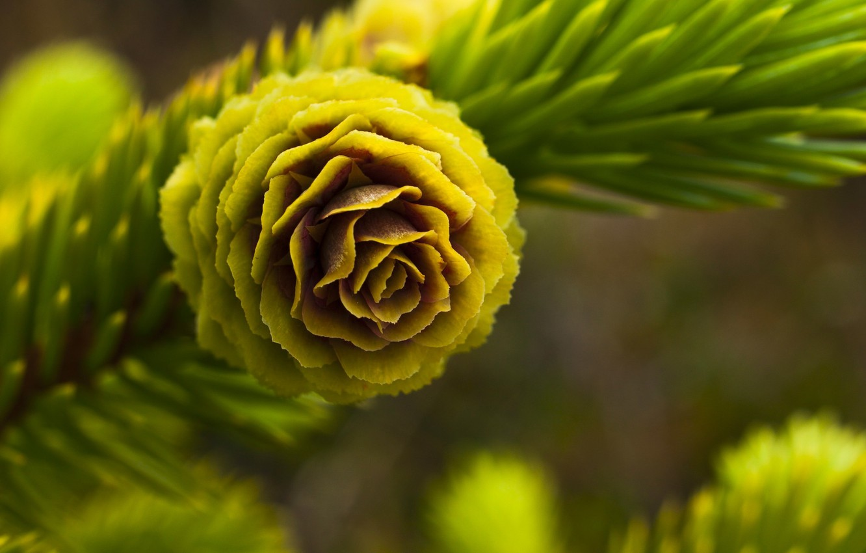 Фото обои Зелень, Цветок, Иголки, Ветка