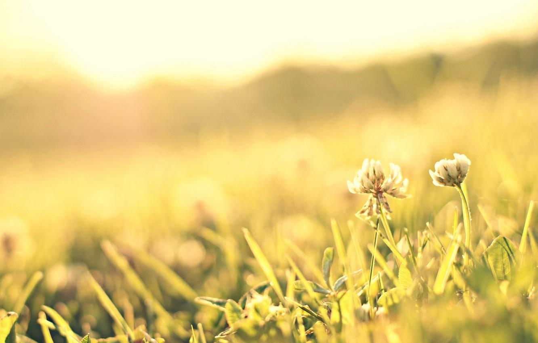 Фото обои зелень, цветок, трава, солнце, макро, цветы, фон, розовый, widescreen, обои, лепестки, луг, wallpaper, flower, широкоформатные, …
