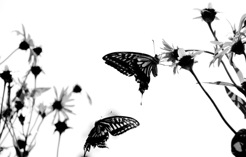 Фото обои белый, бабочки, настрой