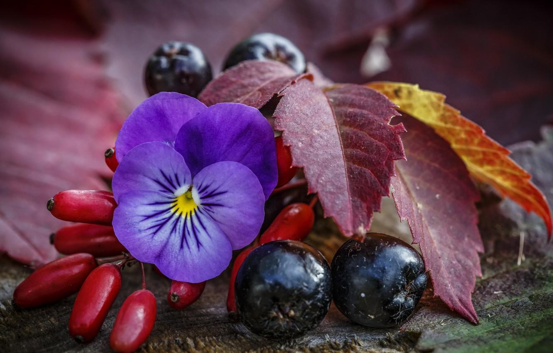 пару картинки из ягод осени для рабочего стола была приятно поражена