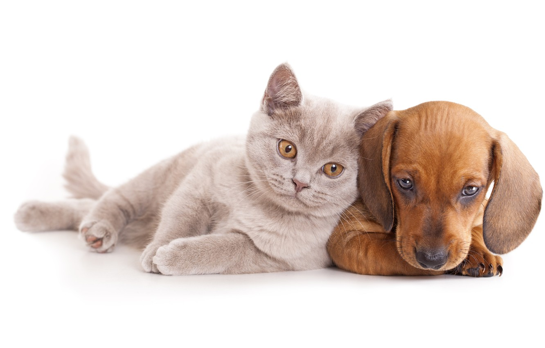 Картинки кошки и собаки без фона
