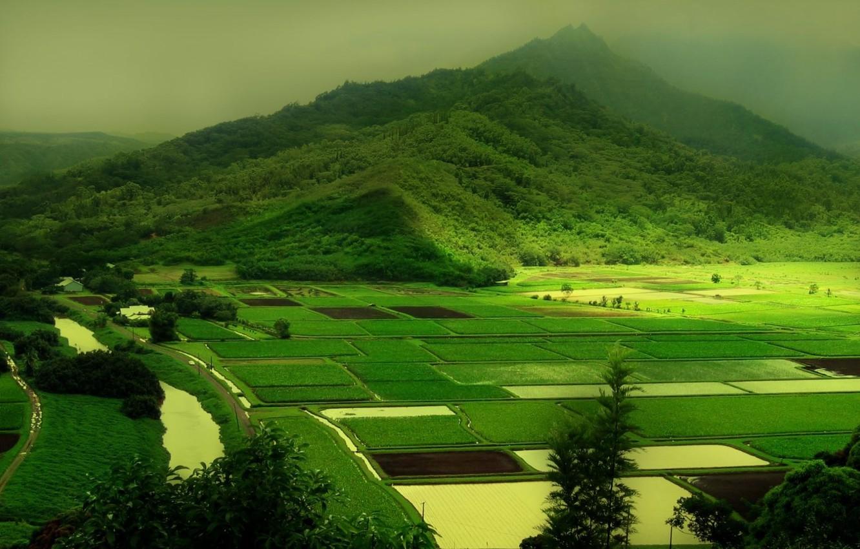 Фото обои зелень, природа, green, холмы