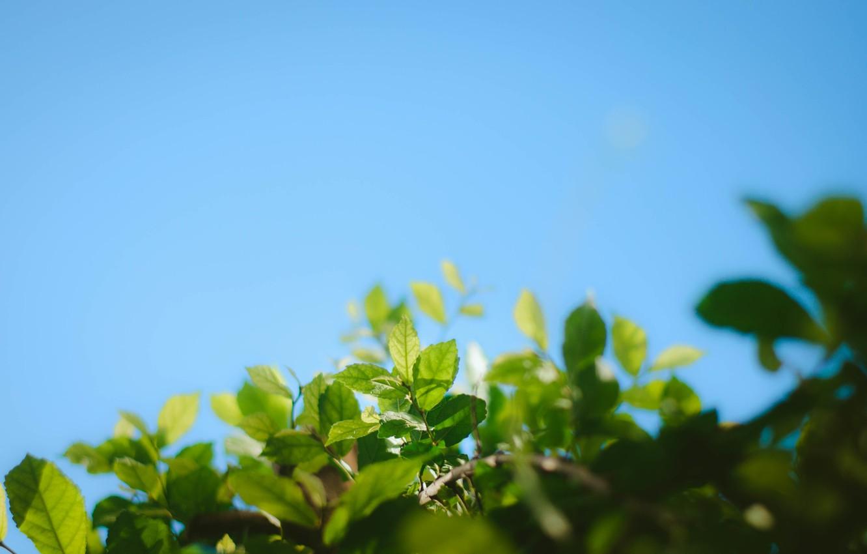 Фото обои небо, зеленые листья, ветка