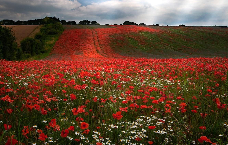 Красивое цветущее поле фото