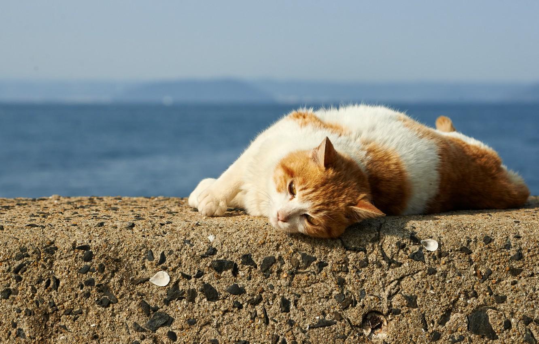 Котик шлет поцелуй картинки хьюго хината