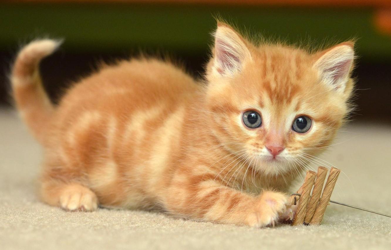 уотс как картинки рыжего котенка очень часто