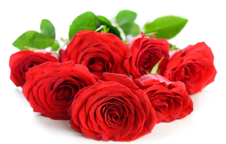 Фото обои цветы, розы, лепестки, красные розы