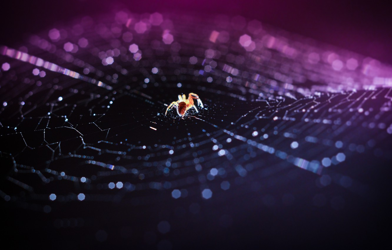 Фото обои макро, паутина, паук, боке