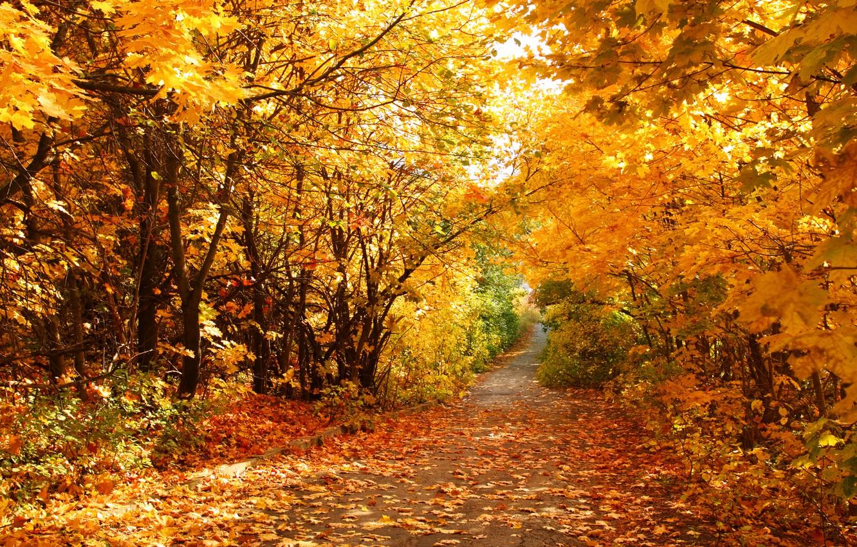 Фото обои осень, листья, дорожка
