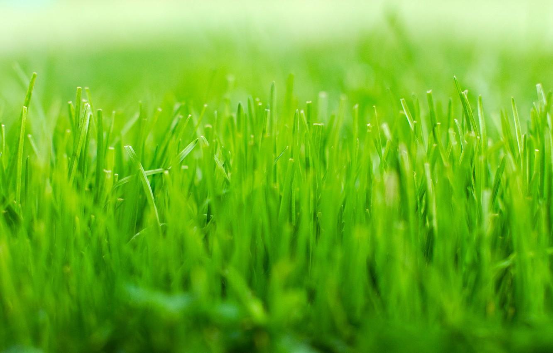 Фото обои green, Grass, nature