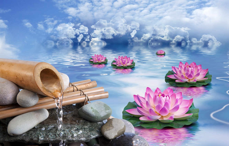 Фото обои небо, вода, облака, цветы, камни, бамбук, лотосы