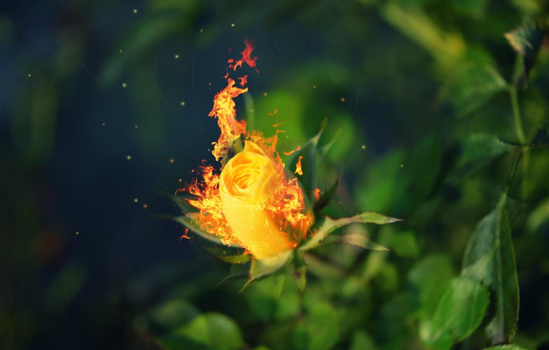 ношу кармане картинки розы и огонь именно поэтому даже
