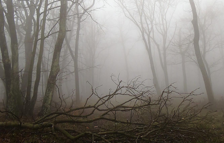 Картинки страшного леса в тумане