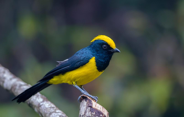Фото обои птица, цвет, ветка, перья, хвост