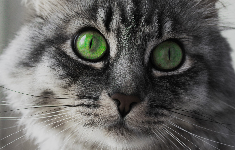 Картинки красивых кошек с зелеными глазами