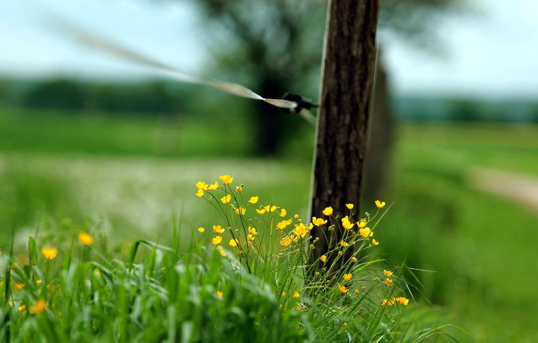 Фото обои трава, макро, забор