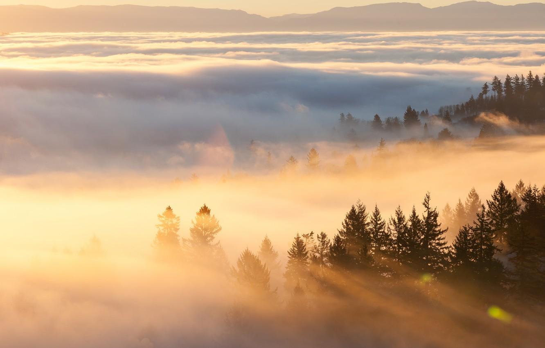 Фото обои горы, туман, утро
