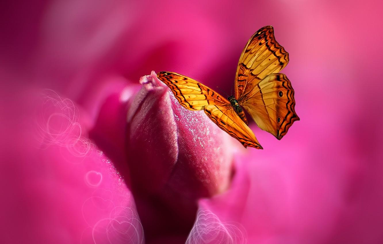 Фото обои цветок, бабочка, краски, сердце, стилизация, Josep Sumalla