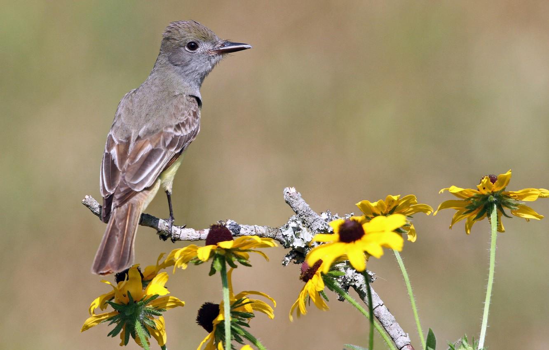 Фото обои цветы, фон, птица, ветка, желтые, рудбекия