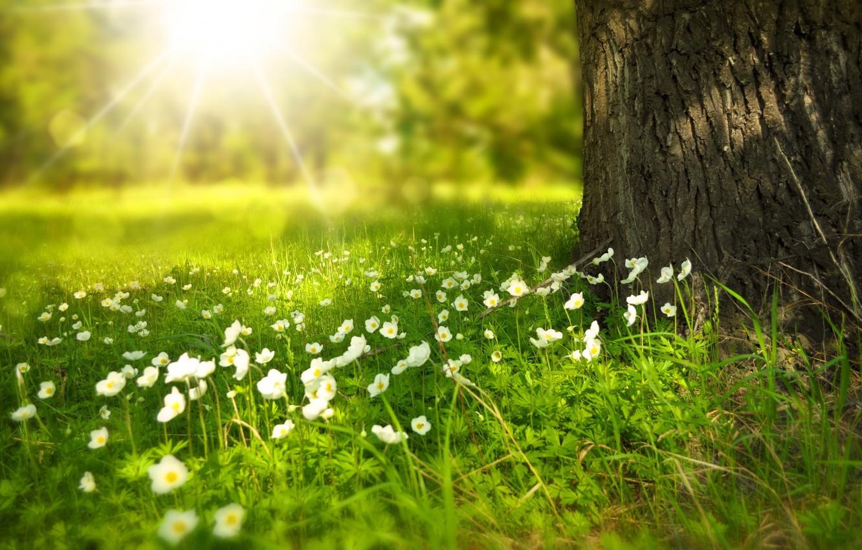 Фото обои лето, лучи, свет, цветы, дерево, поляна, ствол, Larisa Koshkina