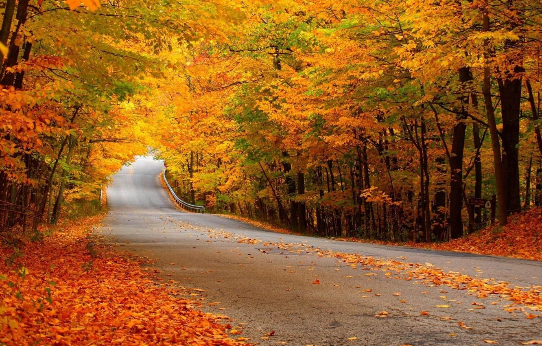 Фото обои дорога, осень, лес, желтая листва