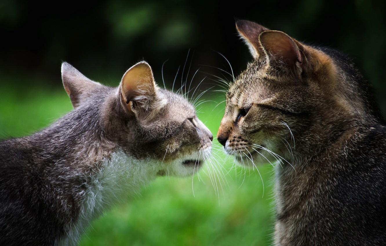 последнему картинки кошек парами районе