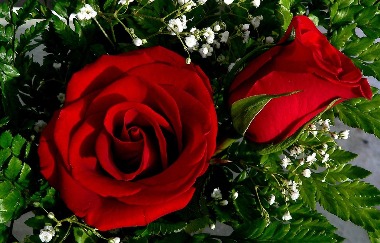 многие другие покажи мне фото цветы розы основе пышных