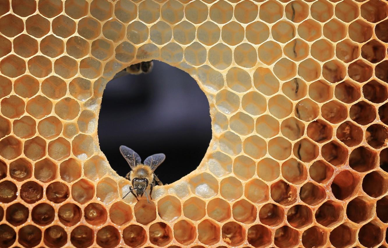 Картинка соты и пчелы