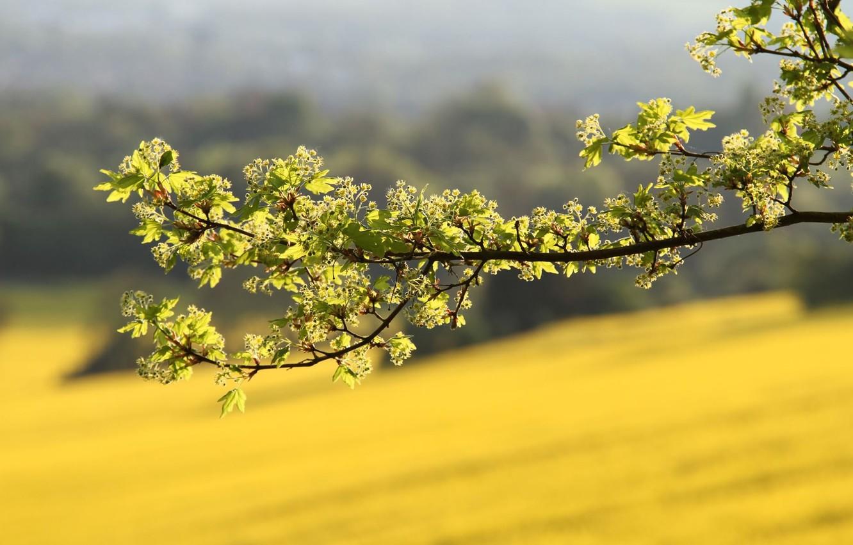 Фото обои зелень, лето, макро, свет, Ветка