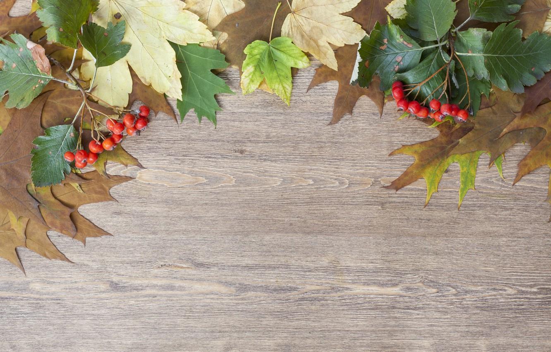Фото обои листья, ветки, ягоды, доска, боярышник