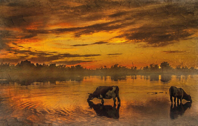 Фото обои закат, текстура, коровы, водопой
