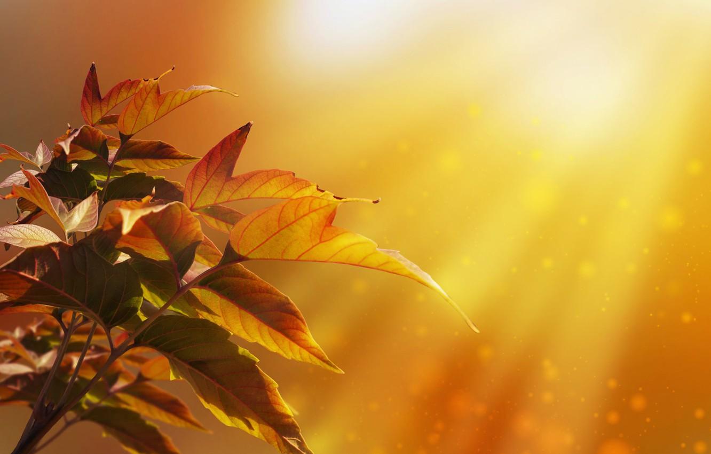 Фото обои осень, листья, лучи, свет, природа, дерево, боке, Larisa Koshkina